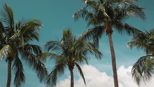 driving past palm trees on miami beach - palm tree stock videos & royalty-free footage