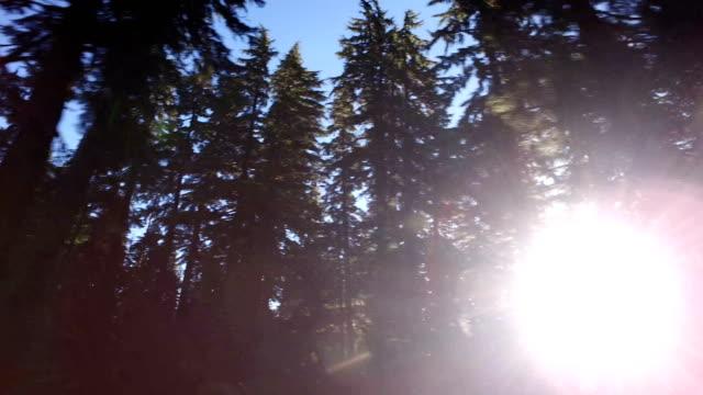 vidéos et rushes de vous passez devant les pins au lever du soleil - parc national