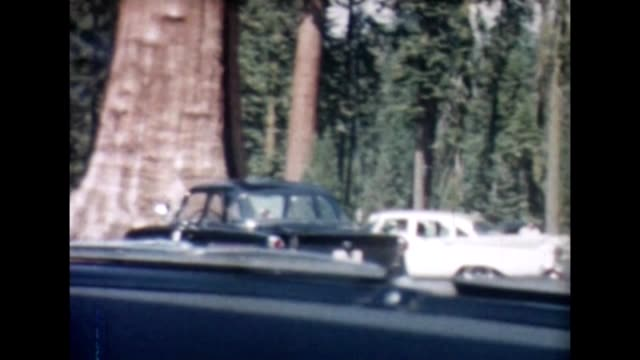1955 driving past redwoods - giant sequoia stock videos and b-roll footage