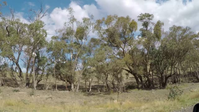driving past trees, fields and farmhouses in rural landscape country australia - telephone pole stock videos & royalty-free footage