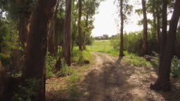 Driving Riding slowly a Car bike on a forest internal dirt Road – POV Plate
