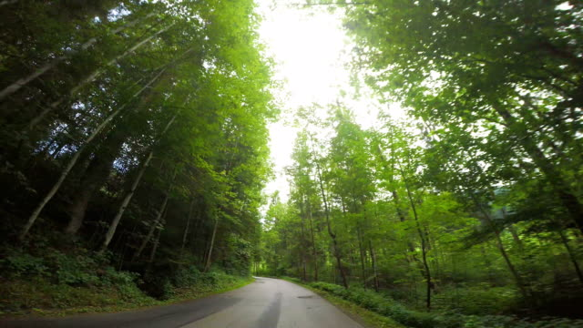 Driving right through the lush forest
