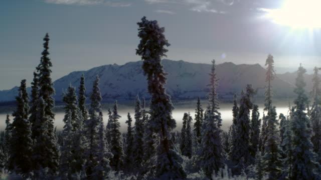 stockvideo's en b-roll-footage met driving shot in alaskan winter with hemlock trees. - pannen