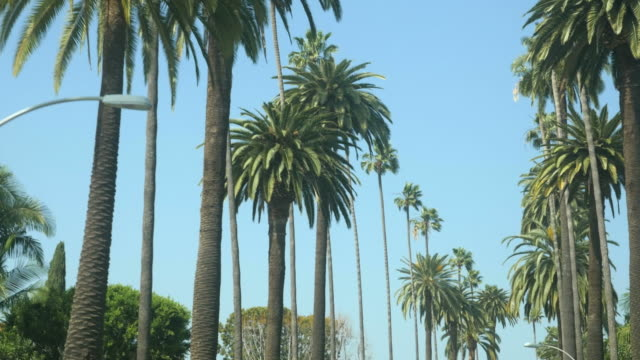 Driving Shot of Hollywood Blvd Palm Tree