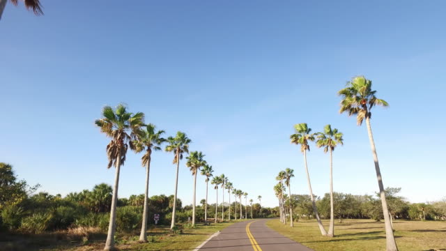 driving shot of palm trees in florida - palma video stock e b–roll