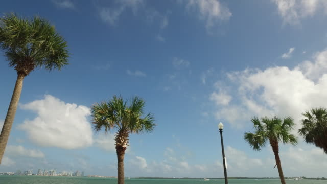 Driving shot of palm trees in the city of Miami, Florida