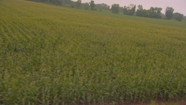 driving shot past farm - moving past stock videos & royalty-free footage
