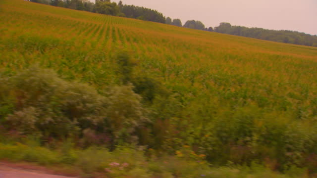 driving shot past farms, dutch angle - moving past stock videos & royalty-free footage