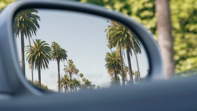 vídeos de stock e filmes b-roll de driving through a boulevard with palm trees in california - palmeira
