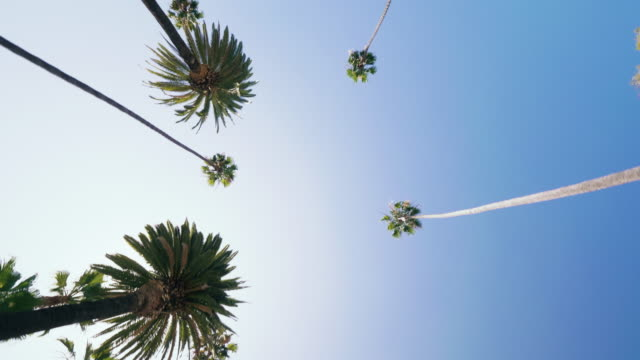 driving through a boulevard with palm trees in california - below stock videos & royalty-free footage