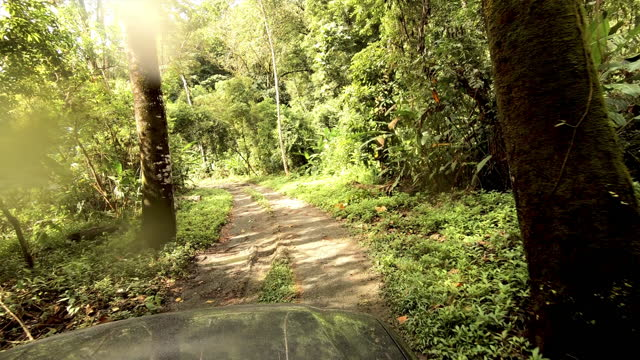 4x4 driving through a costa rican remote rainforest: muddy road - tropical tree stock videos & royalty-free footage