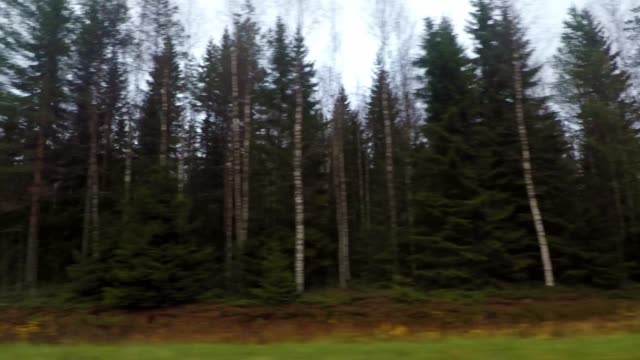 vidéos et rushes de driving through a forest on highway, road trip, car travel in finland - car point of view