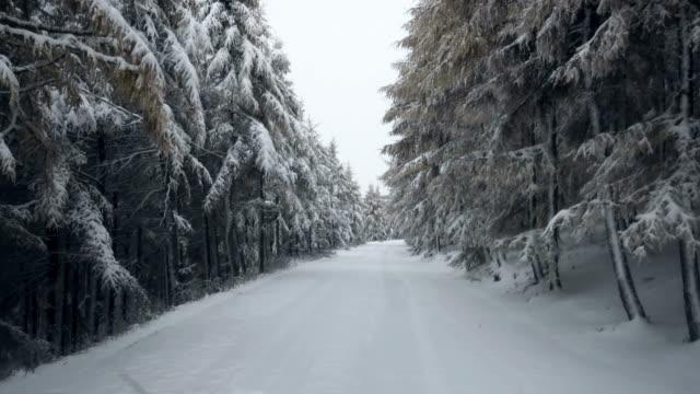 vídeos de stock, filmes e b-roll de driving through a snowy forest - ponto de vista de câmera