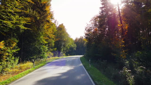driving through autumn forest on sunny day - car point of view stock videos & royalty-free footage