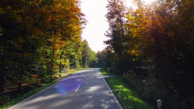 POV rijden door herfst bos (UHD)