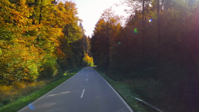 pov driving through autumn forest (uhd) - empty road stock videos and b-roll footage