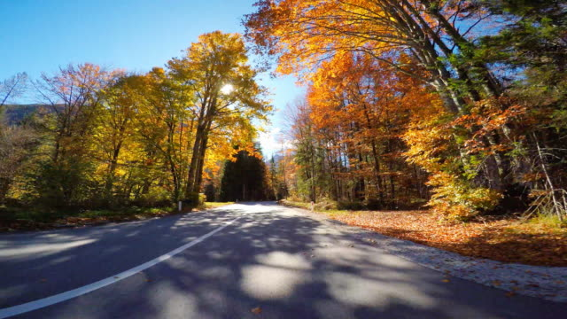 Driving through autumn forest with sun shinning through colorful leaves