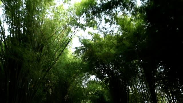 vídeos y material grabado en eventos de stock de conducción a través de los árboles de bambú - cambio de oficina