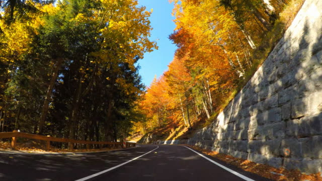 driving through colorful autumn forest on sunny day - autumn leaf color stock videos & royalty-free footage