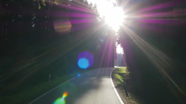 POV Driving Through Coniferous Forest (UHD)