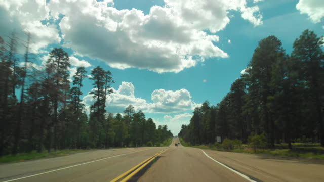 pov driving through forest and sedona - red rocks stock videos & royalty-free footage