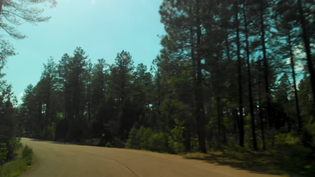 pov driving through forest and sedona - car point of view stock videos & royalty-free footage
