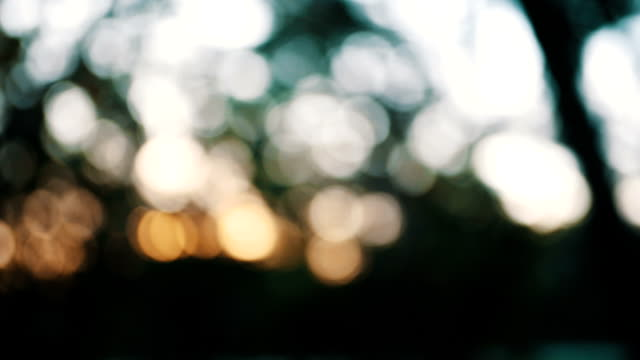 driving through forest bokeh background - symbol stock videos & royalty-free footage