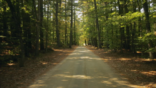 t/l ws pov driving through forest / new hampshire, usa - sentiero video stock e b–roll