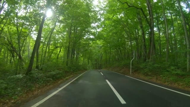 driving through forest rainy road - land vehicle stock videos & royalty-free footage