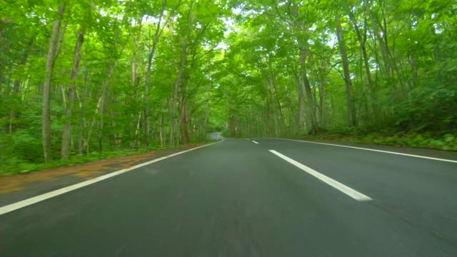 driving through forest rainy road - aspetto naturale video stock e b–roll