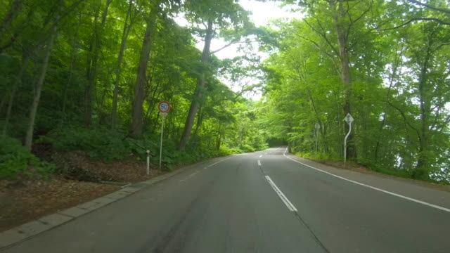 Driving Through Forest Road by the lake