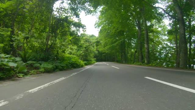 kör genom skogen road - plusphoto bildbanksvideor och videomaterial från bakom kulisserna