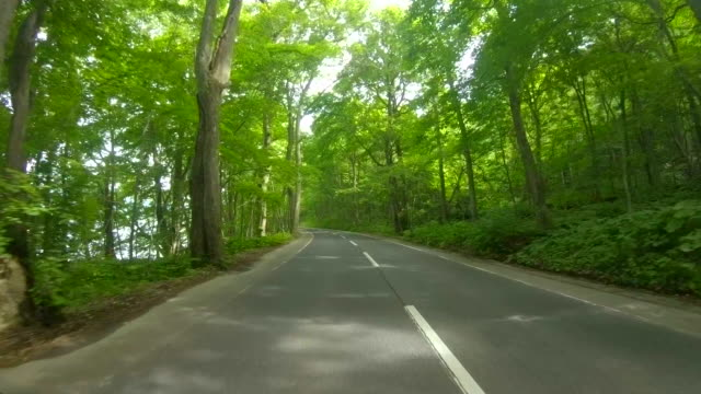 driving through forest road - land vehicle stock videos & royalty-free footage