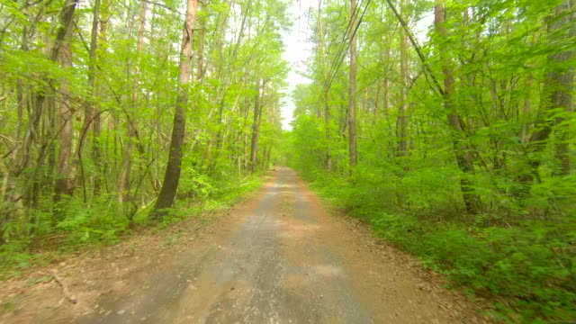 driving through forest road - natural condition stock videos & royalty-free footage