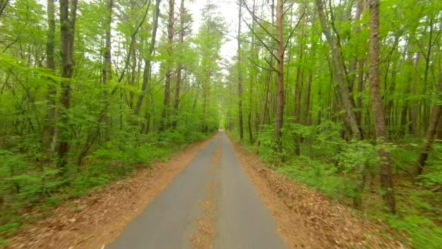 vídeos y material grabado en eventos de stock de conducción a través del camino forestal - plusphoto