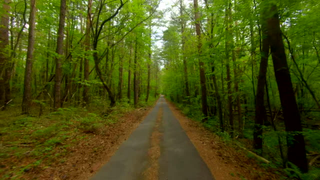 driving through forest road - diminishing perspective stock videos & royalty-free footage