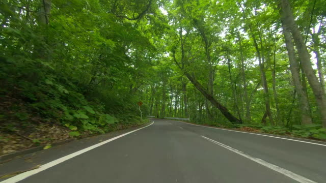 driving through forest road - winding road stock videos & royalty-free footage