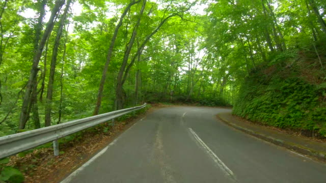 Driving Through Forest Road
