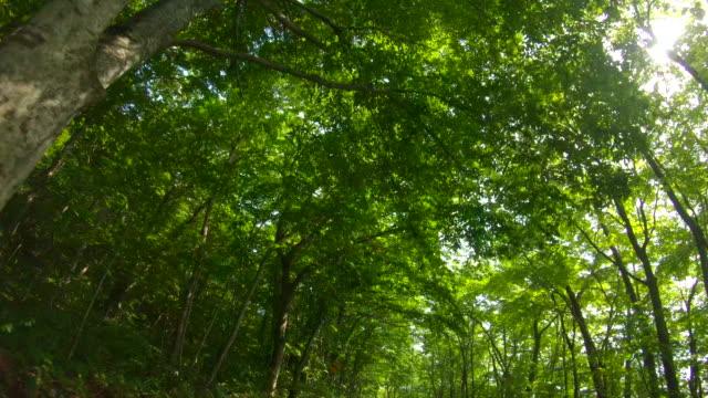 森の道を通って運転 - 市街地の道路点の映像素材/bロール