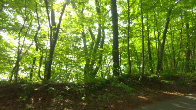 vídeos de stock, filmes e b-roll de dirigindo pela estrada da floresta - entrada para carros