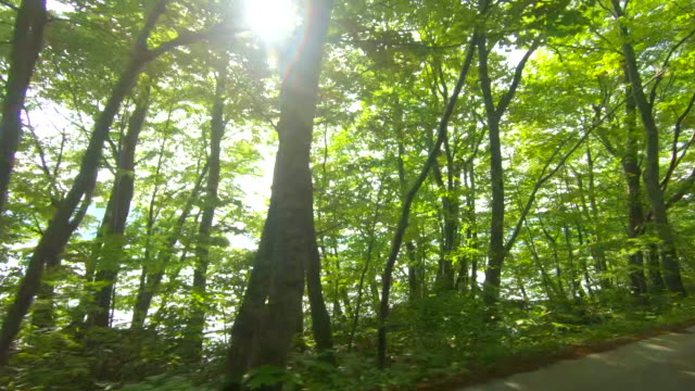 driving through forest road - driveway stock videos & royalty-free footage