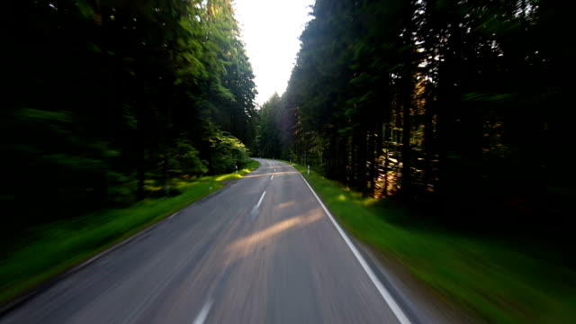 POV T/L Driving Through Green Forest