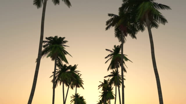 Driving through palm trees at sunset
