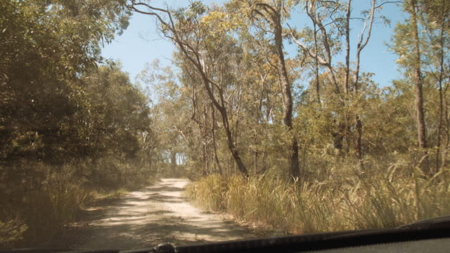 driving through the forest at evans head, new south wales, australia - dirt track stock videos & royalty-free footage