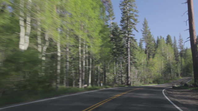 POV driving through the forest in Lake Tahoe