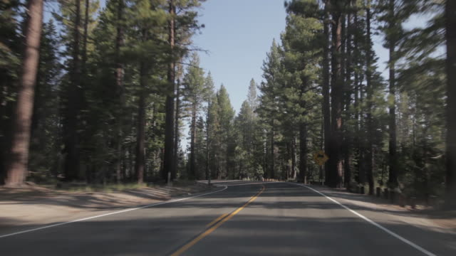 vídeos de stock, filmes e b-roll de pov of driving through the forest in lake tahoe - sierra nevada da califórnia