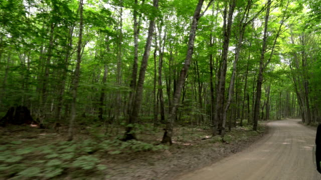 driving through the forest in the upper peninsula in michigan - ash stock videos & royalty-free footage