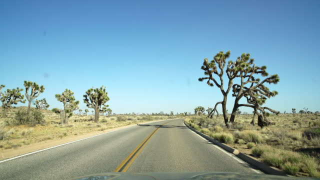 pov driving through the joshua tree national park - natural landmark stock videos & royalty-free footage