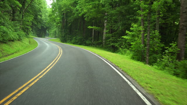 driving through the lush green forest of great smoky mountains national park, tennessee - grandangolo tecnica fotografica video stock e b–roll