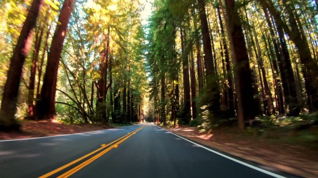 driving through the redwood forest in california - coast redwood stock videos & royalty-free footage